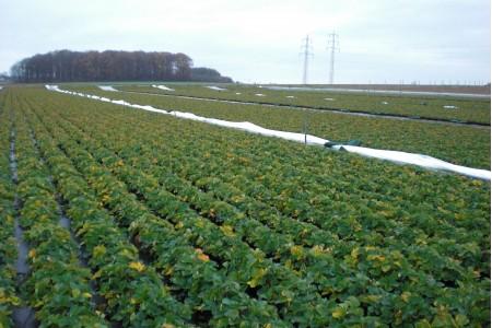 Endstadium der Traypflanzen im November