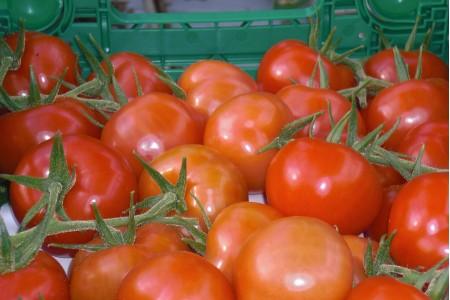 marktfertig aufbereitete Tomatenkiste