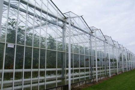 geschützter Anbau im Treibhaus