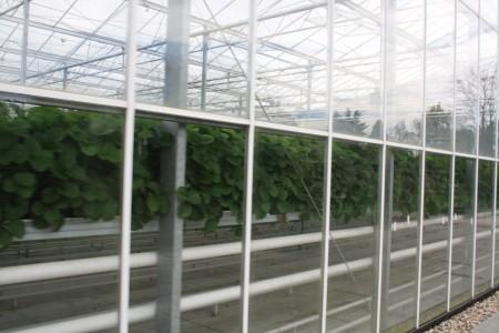 geschützer Anbau, Schutz vor Wind, Regen, direkter Sonneneinstrahlung