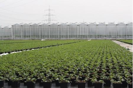 Mutterpflanzen im April